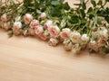 Roses roses lumineuses de jet sur le fond en bois Photos stock