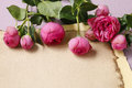 Roses and sheet of vintage paper Royalty Free Stock Photo