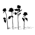 Roses silhouettes collection with shadows on white Royalty Free Stock Photos