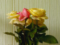 Roses some home grown against wallpaper Stock Photo