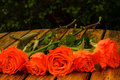 Roses on a table orange in garden ready for bouquets Royalty Free Stock Images