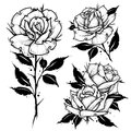 Roses tattoo. Dot work vector illustration