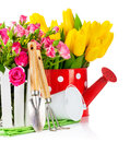 Roses and tulips with garden tools Royalty Free Stock Images