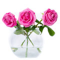 Roses in vase on a white background Stock Image
