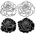 Roses Vector Illustration Stock Photo