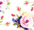 Roses, watercolor illustration Royalty Free Stock Photography
