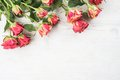 Roses on wooden background Stock Images