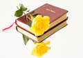 Roses and the Word of God Royalty Free Stock Photo