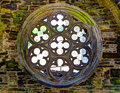 Rosette a medieval building Royalty Free Stock Photo