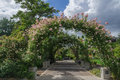 Roseway arch white billowing clouds above sun kissed roses growing on an archway walk at the owen rose garden in eugene oregon Royalty Free Stock Image