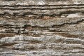 Rotted wood Royalty Free Stock Photo