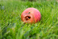 Rotten apple decaying on the ground Stock Photo