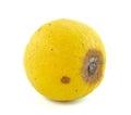 Rotten lemon fruit on white isolated Royalty Free Stock Photography