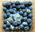 Rotten food : mouldy blueberry fruit Royalty Free Stock Photo