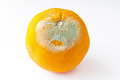 Rotten orange Royalty Free Stock Photography