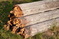 Rotten wood Stock Image