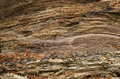 Rotten wood texture Royalty Free Stock Photo