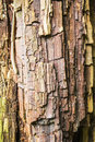 Rotten wood tree trunk with chipped layers of texture Stock Image