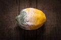 Rotten yellow lemon Royalty Free Stock Photo