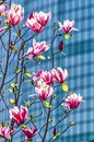 Magnolia and the WTC Royalty Free Stock Photo