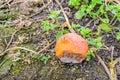 Rotting orange pumpkin left on the field Royalty Free Stock Photo