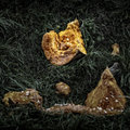 Rotting pumpkin pieces on the garden ground artistically alienated to create a grungy somber atmosphere Stock Image