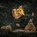 Rotting Pumpkin Royalty Free Stock Photo