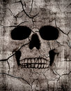 Rotting skull Stock Image