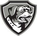 Rottweiler guard dog shield black and white illustration of a metzgerhund mastiff head looking to the side set inside crest done Royalty Free Stock Image