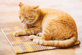 Rouge orange paisible tabby cat male kitten sleeping in son lit dessus Photos stock