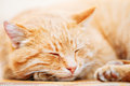 Rouge orange paisible tabby cat male kitten sleeping in son lit dessus Photographie stock libre de droits