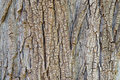 Rough background of tree bark Stock Photos