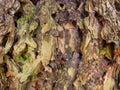 Rough bark closeup full frame Stock Photos