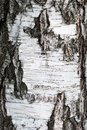 Rough brown bark of the tree backgrounds Stock Photos