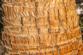 Rough brown palm tree wood bark natural texture background. Stock Image