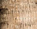 Rough brown palm tree wood bark natural texture background.