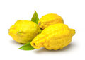 Rough lemon citrus jambhiri lush is the fruit and the tree of a hybrid related to the citron and the Royalty Free Stock Photo