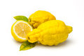 Rough lemon citrus jambhiri lush is the fruit and the tree of a hybrid related to the citron and the Stock Photos