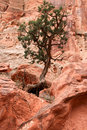 A rough life in the desert this is an image of loney tree amoungst sandstone south western of utah Stock Photo