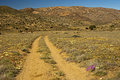 Rough road with lanes for offroad vehicles in a semi desert hilly landscape namaqualand south africa Royalty Free Stock Photos
