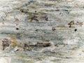Rough stone texture Stock Photo