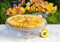 Round apricot cake on cake stand garden party selective focus Royalty Free Stock Photos