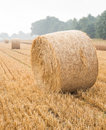 Round bales of straw on a stubble field in the morning mist Stock Photos