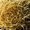 Round Cactus Royalty Free Stock Photos