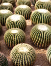Round Cactus Garden Stock Images