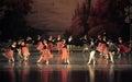 Round dance-ballet Swan Lake Royalty Free Stock Photo