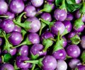 Round eggplant purple Stock Photography