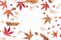 Round frame of autumn fall leaves, dried flowers and cones on white background. Flat lay, top view. Autumn concept Royalty Free Stock Photo