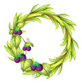 A round frame with violet berries illustration of on white background Royalty Free Stock Photography