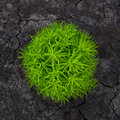 Round green bush on a background of cracked earth Royalty Free Stock Photos